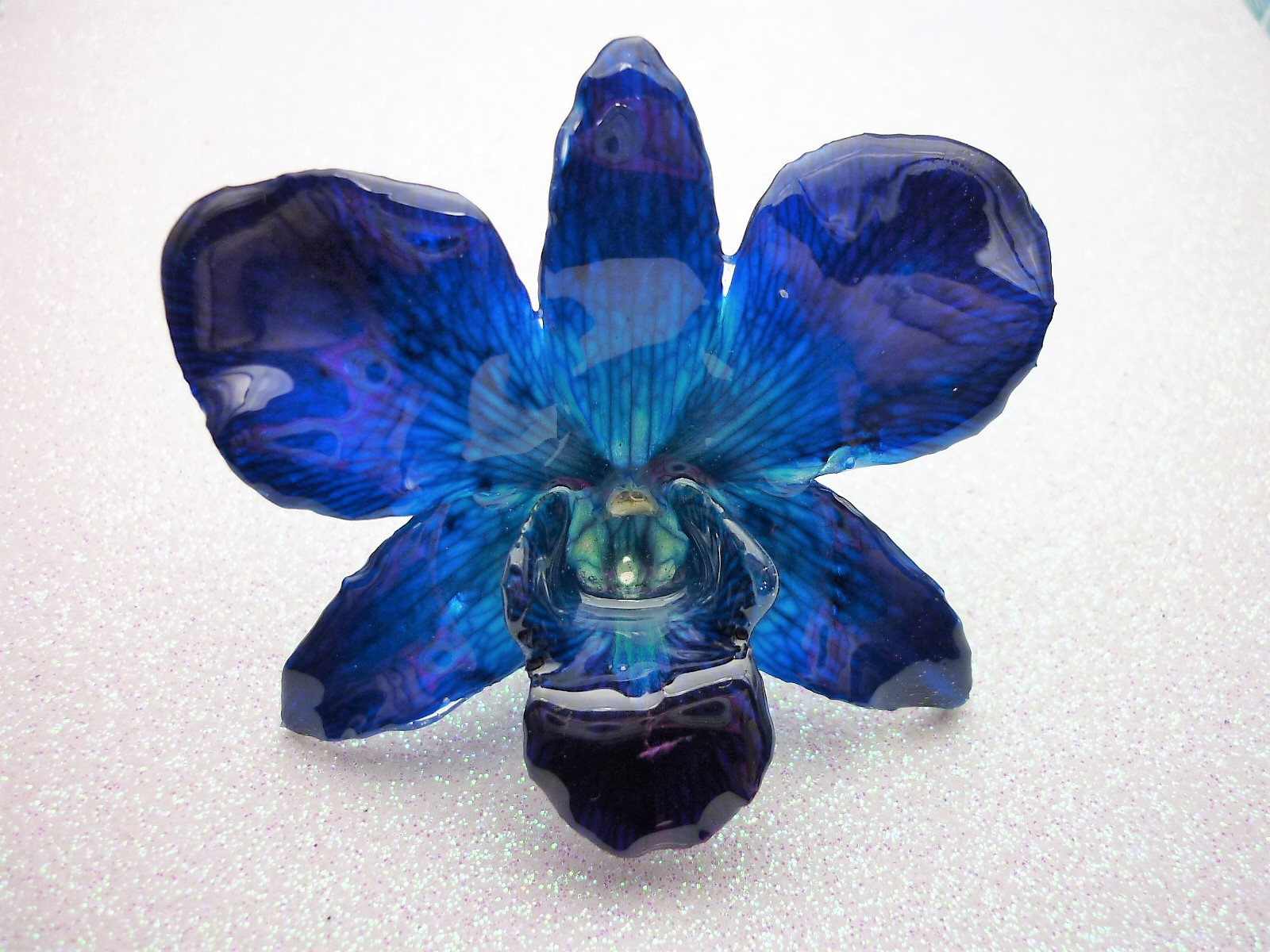 Real Orchid Flower Necklace Cobalt Blue Real Orchid