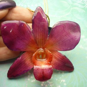 Real Orchid Flowers